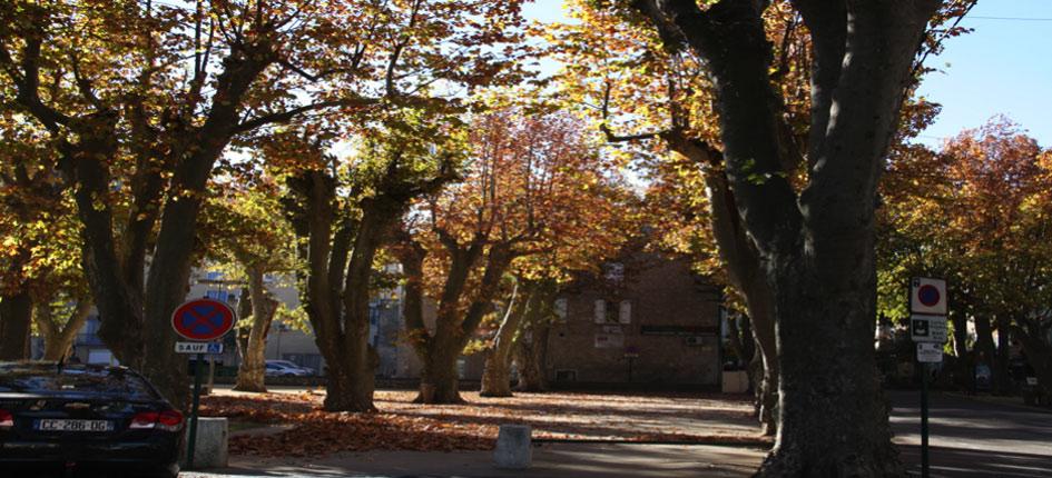 vue de la place arborée de platanes en automne